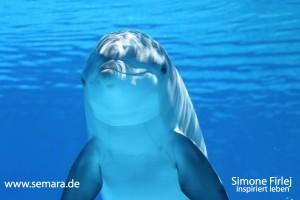 delphin