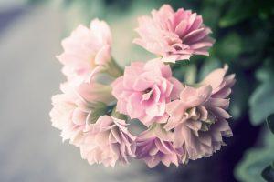flower-1308331_1920