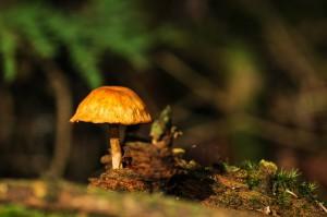 mushrooms-222039_1280