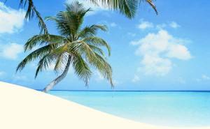 palmenumeer