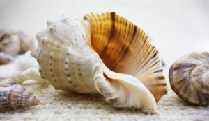 seashells-1348742_1920